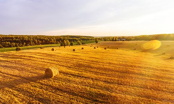 Avocats ANgers, Droit Rural - redistribution des terres