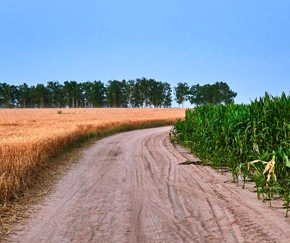Droit rural - chemins ruraux