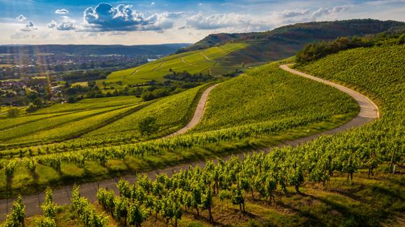 Baux viticoles